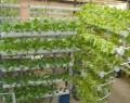 Giàn treo trồng rau thủy canh GT6