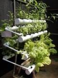 Giàn treo trồng rau thủy canh GT3